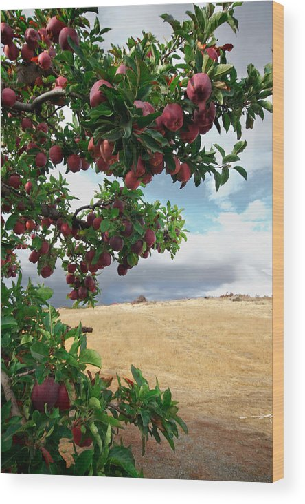 Apple Wood Print featuring the photograph Applessence by Marcus Angeline
