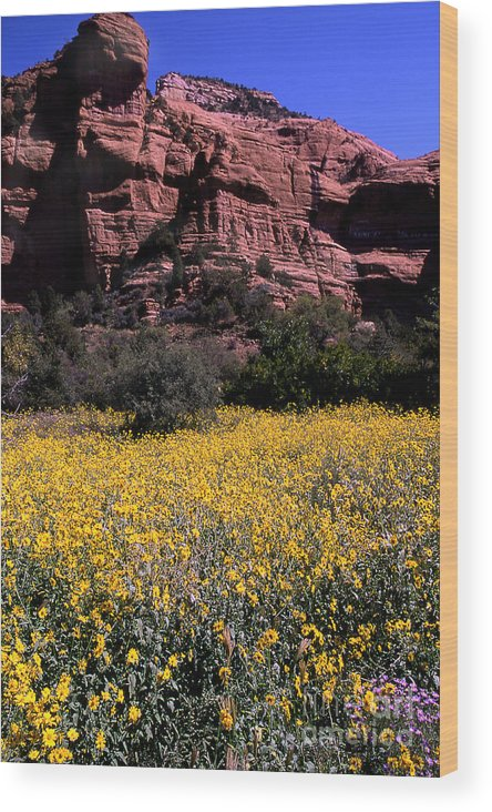 Flower Wood Print featuring the photograph Arizona Flower Field by Barry Shaffer