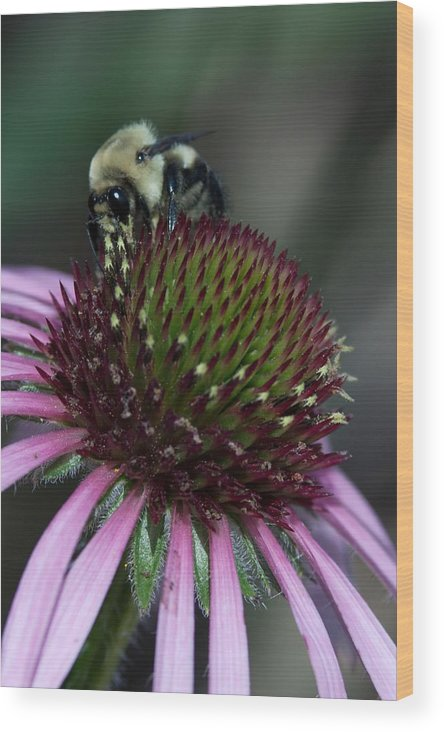 Flowers Wood Print featuring the photograph Bee Life 1 by Bradley Charles