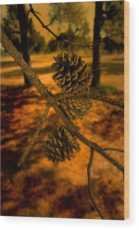 Tree Wood Print featuring the photograph Beginning Of A Forest by Nina Fosdick