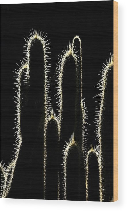 Silhouette Wood Print featuring the photograph Cacti by Dan Gazit