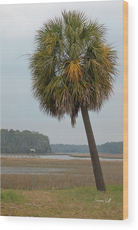 Palmetto Wood Print featuring the photograph Carolina Palmetto by Suzanne Gaff