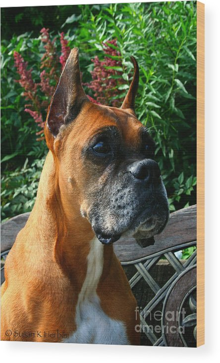 Dog Wood Print featuring the photograph Classic Boxer by Susan Herber