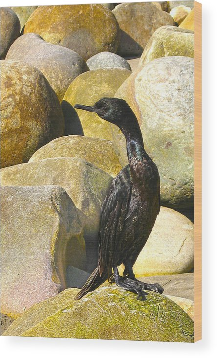 Nature Wood Print featuring the photograph Cormorant 1 by Marie Morrisroe