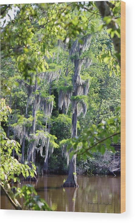 Cypress Trees Wood Print featuring the photograph Cypress Strong by Deborah Hughes