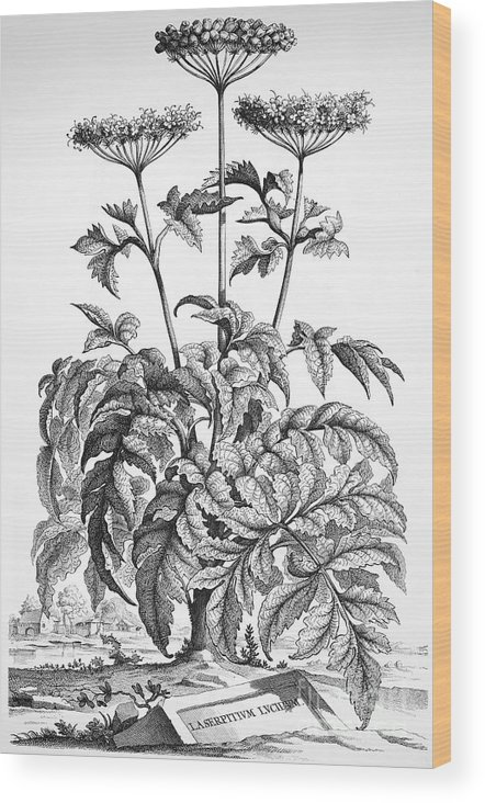 1696 Wood Print featuring the photograph Decorative Flower by Granger