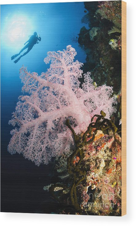 Diver Wood Print featuring the photograph Diver Over Soft Coral Seascape by Todd Winner