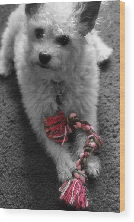 Dog Wood Print featuring the photograph Dog With Tug Toy Soft Focus by Sarah Broadmeadow-Thomas