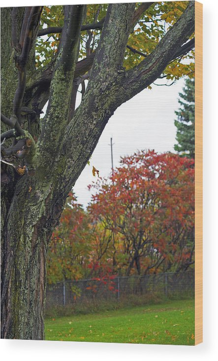 Fall Wood Print featuring the photograph Fall Maple by Elaine Mikkelstrup
