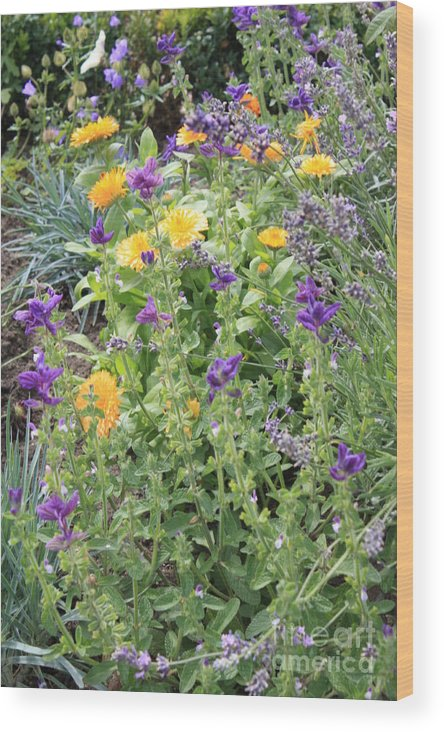 Flowers Wood Print featuring the photograph Flowers In Charlottenburg Palace Garden by Carol Groenen