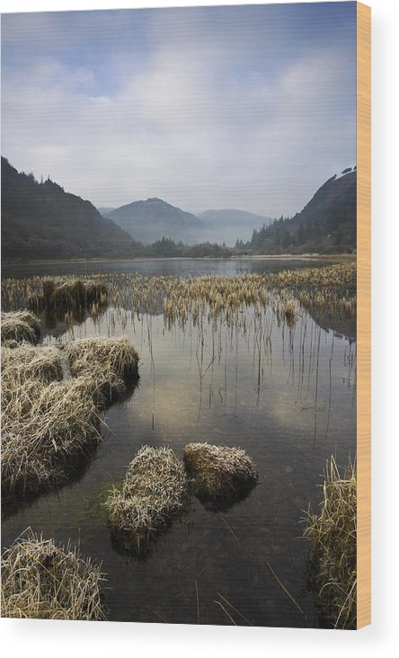 Frost Wood Print featuring the photograph Frosty Winters Morning, Lower Lake by Peter McCabe