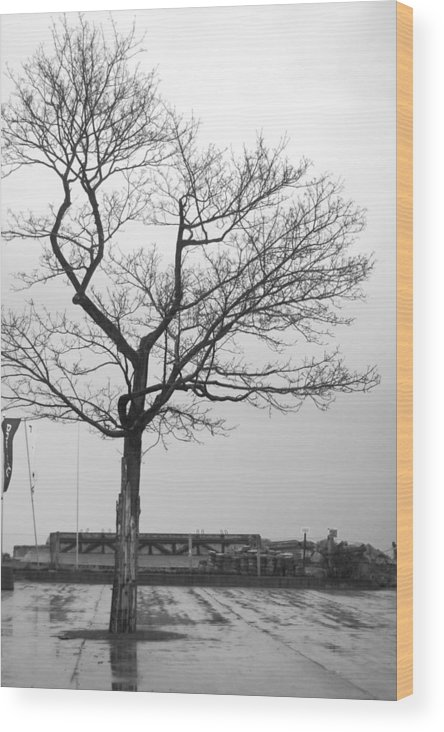 This Was Taken On A Small Island In Gdansk Wood Print featuring the photograph Gdansk by Theo Barber-Bany