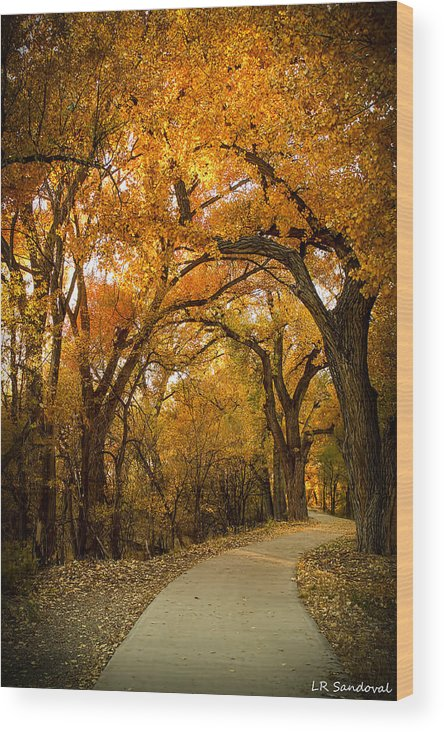 Autumn Wood Print featuring the photograph Golden Canopy by Lena Sandoval-Stockley
