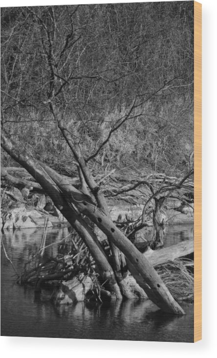 Landscape Wood Print featuring the photograph Holy Tree by Jessica Priebe