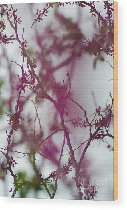 Vine Wood Print featuring the photograph Inter-vined by Scott Hervieux