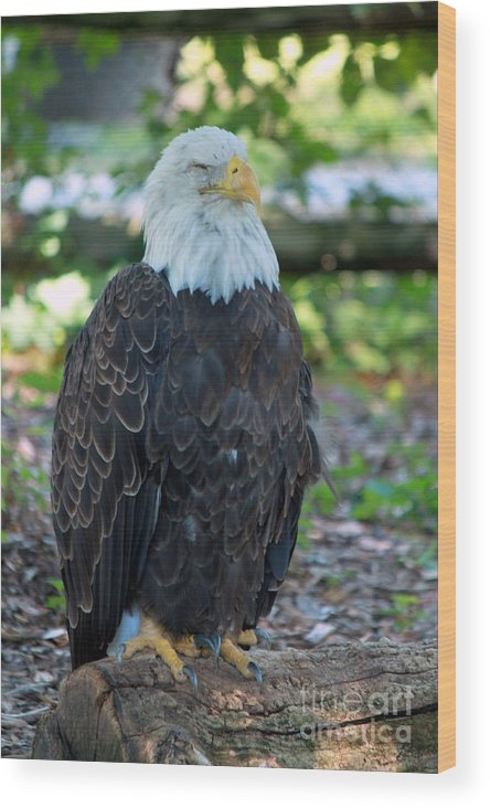 Bald Eagle Wood Print featuring the photograph Majesty 1 by Eric Irion