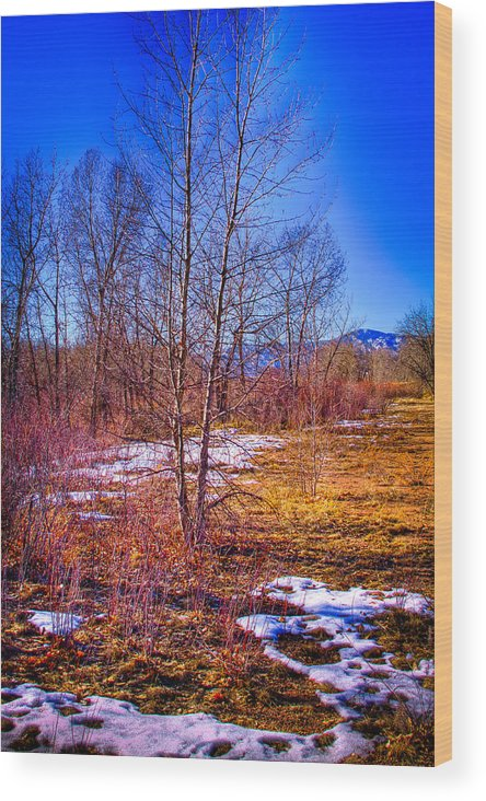Denver Wood Print featuring the photograph Melting Snow In South Platte Park by David Patterson