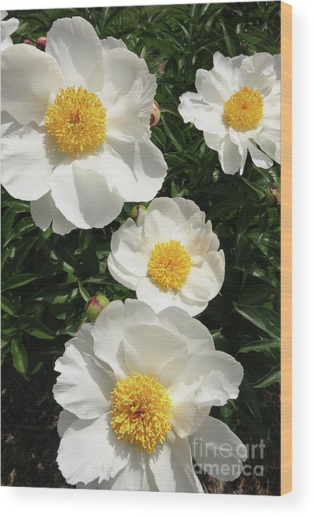 Flowers Wood Print featuring the photograph Morning Praise by Denise Wilkins