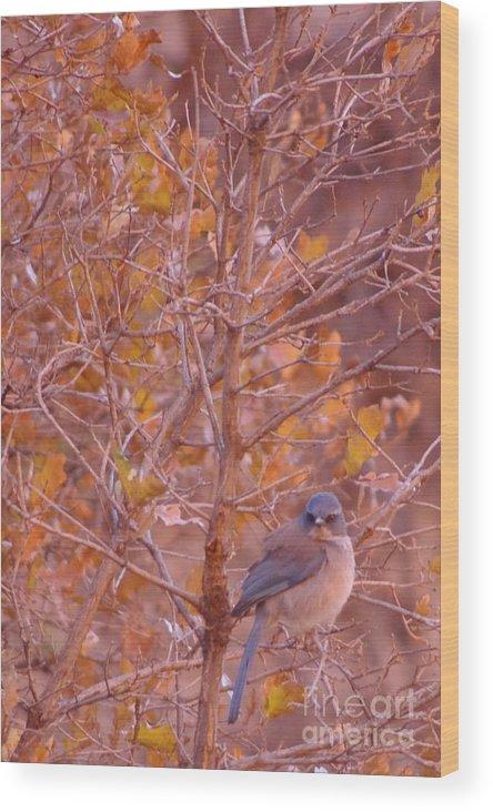 Bluebird Wood Print featuring the photograph Mountain Bluebird by Brandi Christon