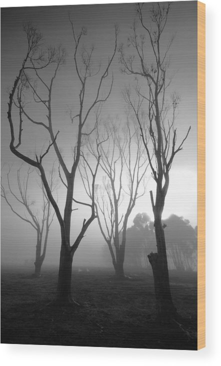 Black And White Photo Wood Print featuring the photograph Mystic Trees 2 by Joe Lategan