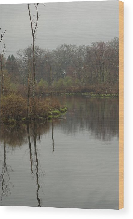 Swamp Wood Print featuring the photograph New England Swamp by Barry Doherty