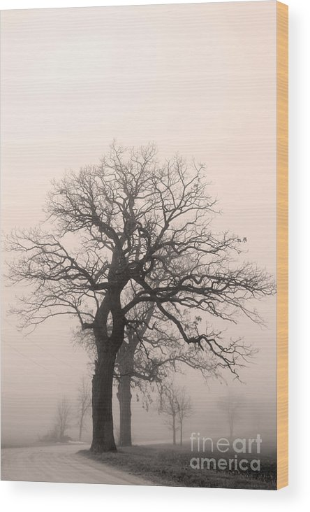 Oak Trees Wood Print featuring the photograph Oak Trees by David Bearden