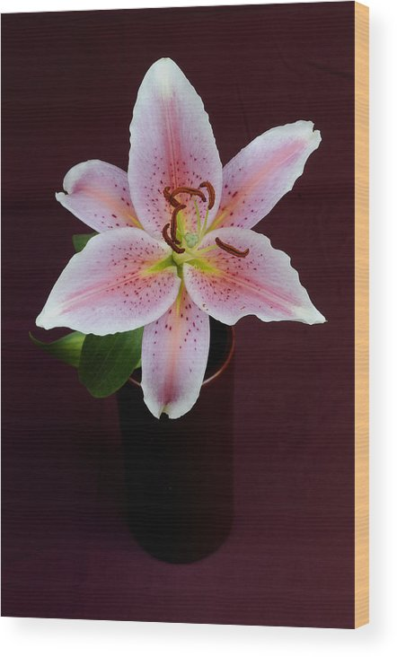 Flower Wood Print featuring the photograph Oriental Lilly by David Van Zet