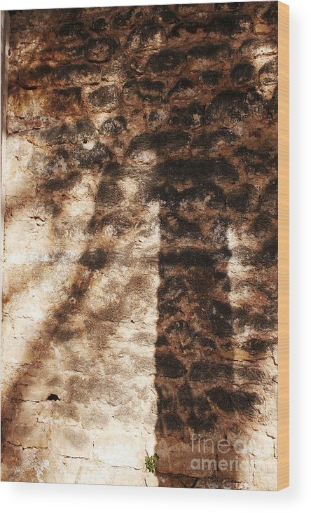 Palmera Wood Print featuring the photograph Palm Trunk by Agusti Pardo Rossello