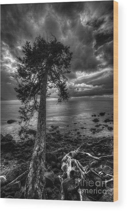Tree Wood Print featuring the photograph Past Roots by Don Guindon
