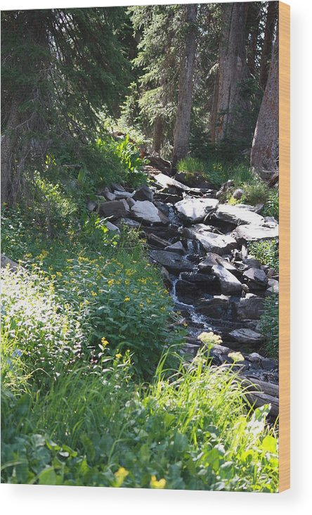 Landscape Wood Print featuring the photograph Peaceful Resting Place by Jackie Easthouse