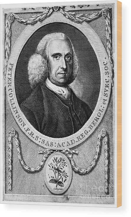 18th Century Wood Print featuring the photograph Peter Collinson (1694-1768) by Granger