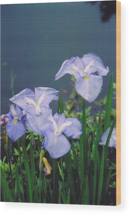 Flowers Wood Print featuring the photograph Pond Side Beauty by Hollie Cyr