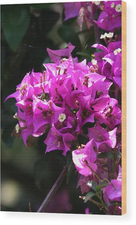 Photograph By James Johnson Wood Print featuring the photograph Purple Blooms by James Johnson