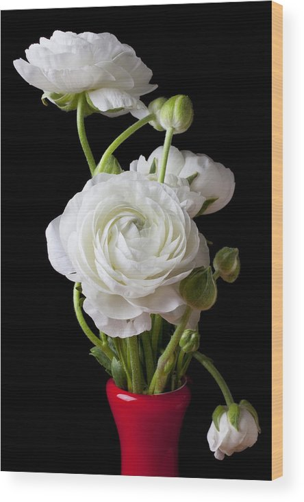 White Ranunculus Flower Red Wood Print featuring the photograph Ranunculus In Red Vase by Garry Gay