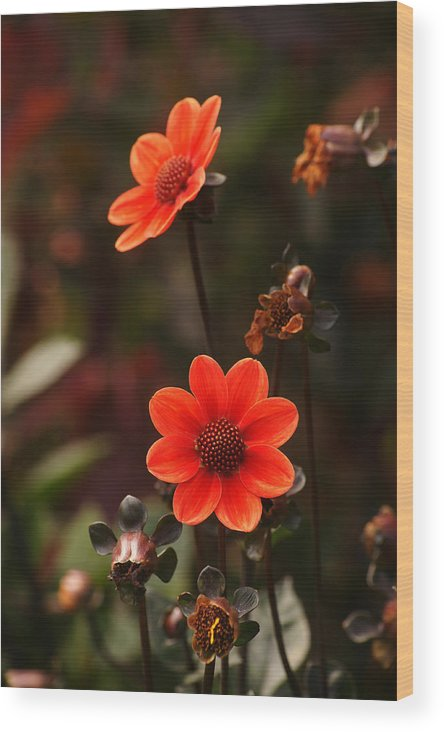 Red Wood Print featuring the photograph Red Flowers by Erik Tanghe