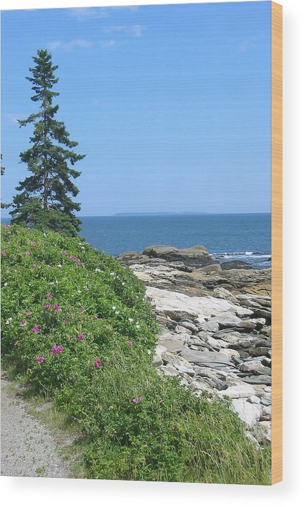 Photograph Of Maine Coast Wood Print featuring the photograph Rocks And Roses by Sarah Gayle Carter