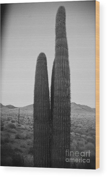 Arizona Wood Print featuring the photograph Saguaro's Eve by Van Schipper