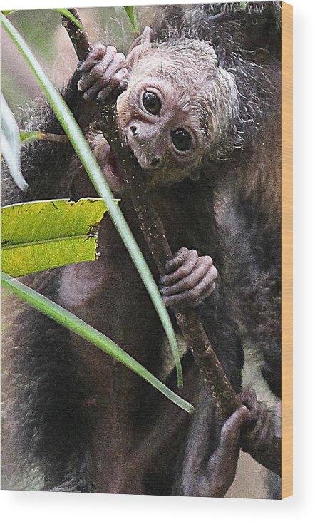 Mom Wood Print featuring the photograph Sak-monkey by Elizabeth Hart
