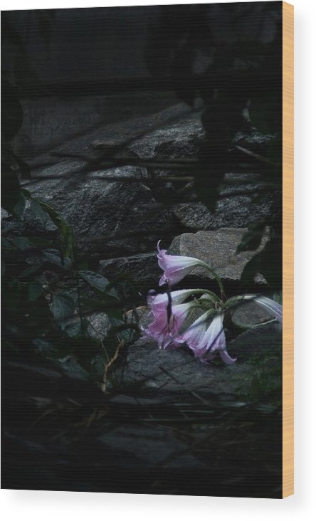 Flowers Wood Print featuring the photograph So Dramatic by Bradley Charles
