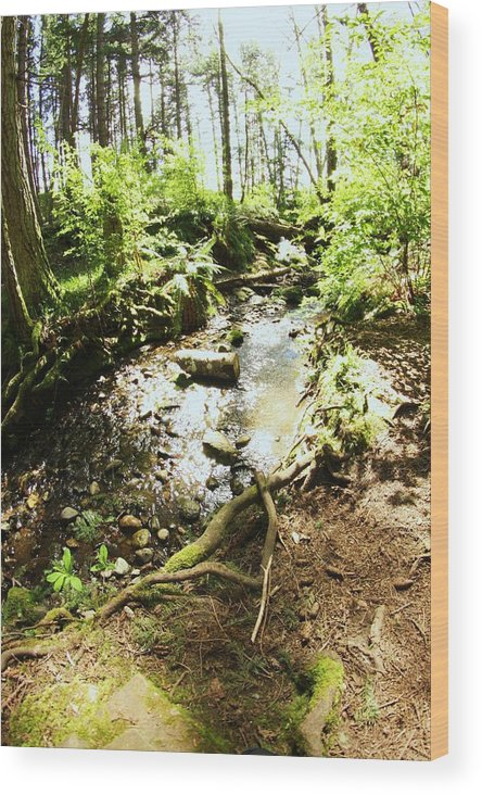 Forest Wood Print featuring the photograph Stream At Devonian Park by Erica Rieger