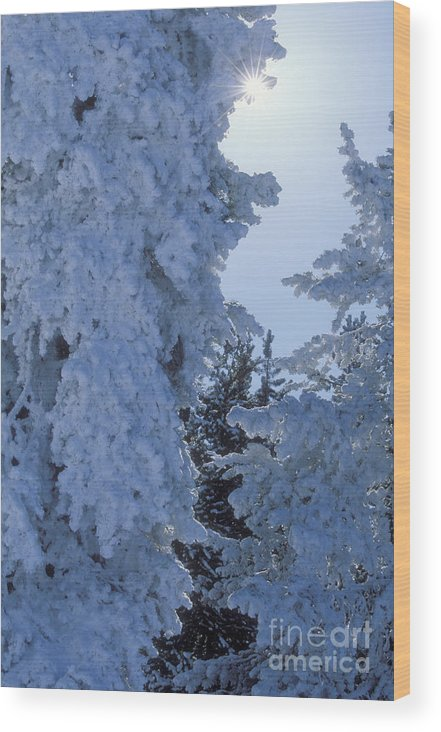 Yellowstone National Park Wood Print featuring the photograph Sunburst In Yellowstone by Sandra Bronstein