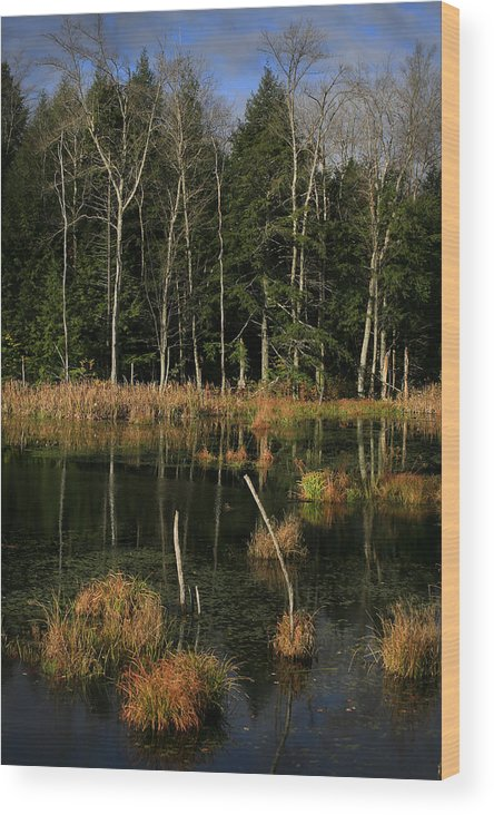 Swamp Wood Print featuring the photograph Swamp 2 by Jesse Baker