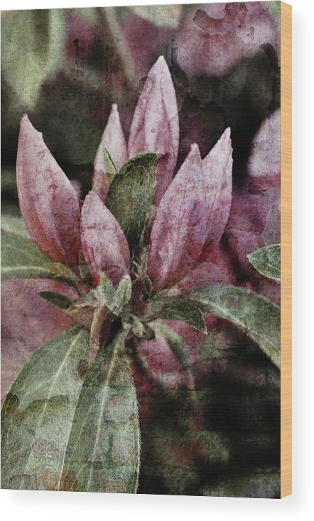 Flowers Wood Print featuring the photograph Textured Blooms 1 by Jonathan Garrett