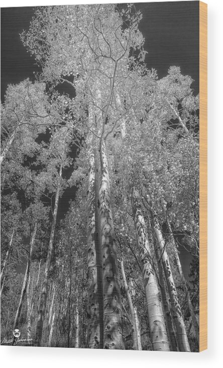 Black N White Wood Print featuring the photograph The Two Split Trees Bw by Mitch Johanson