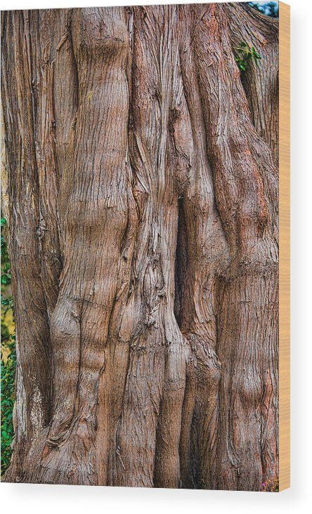 Trees Wood Print featuring the photograph Tree Butts by David Theroff