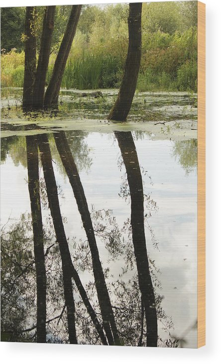 Water Wood Print featuring the photograph Tree Reflection by Andrew May