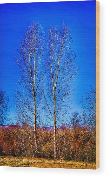 Denver Wood Print featuring the photograph Twin Trees At South Platte Park by David Patterson
