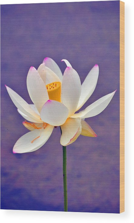 Flower Wood Print featuring the photograph Water Lily by Patrick Friery