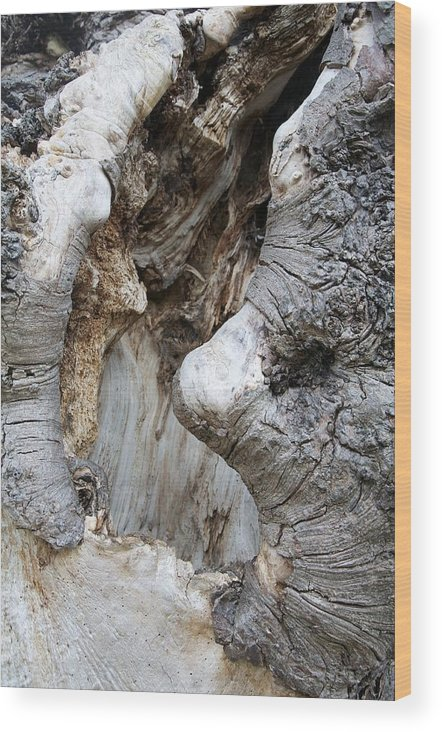 Trees Wood Print featuring the photograph Wise Old Roots by Heather Watson