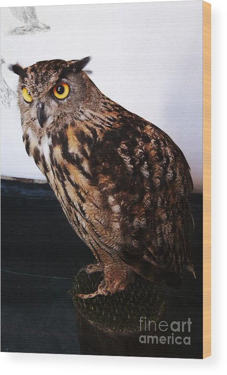 Buho Wood Print featuring the photograph Yellow-eyed Owl Side by Agusti Pardo Rossello